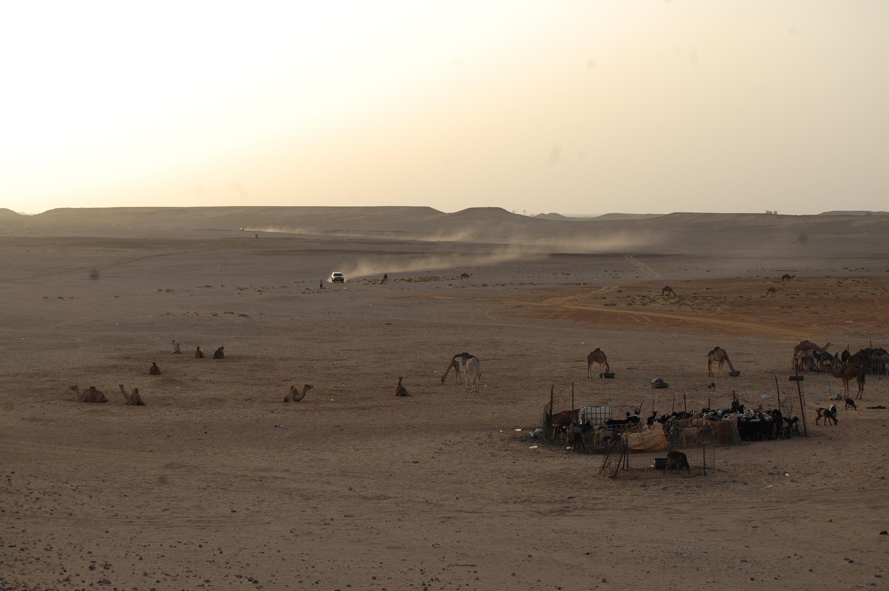 DEDICADO AL PUEBLO SAHARAUI
